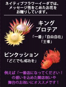 キングプロテア・ピンクッションの花言葉